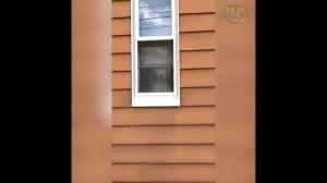 Pies stróżujący