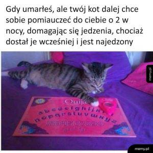 Typowy koteł