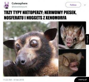 Typy nietoperzy