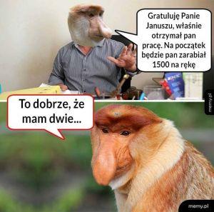 Zarobki Janusza