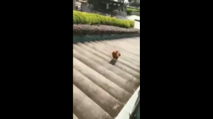 Piesek i schody
