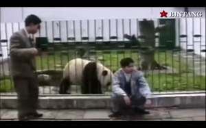Słodka panda