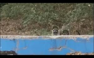 Agent specjalny pandeł