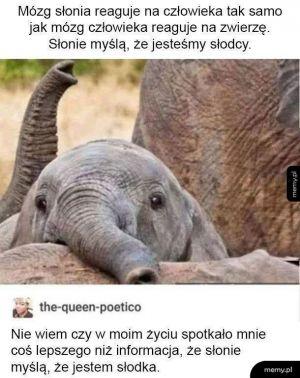 Reakcja mózgu słonika na człowiekza