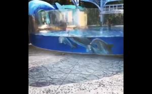 Delfiny obserwują wiewiórki