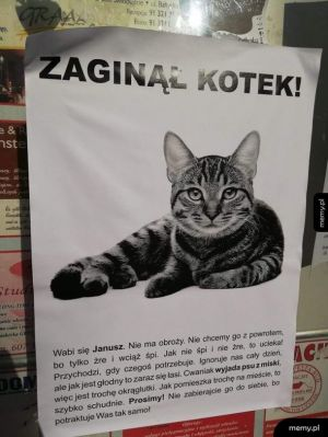 Zaginął kot!