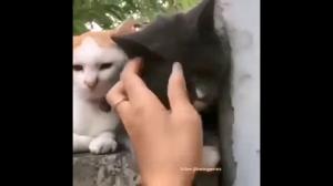 Nie dotykaj mojej laski