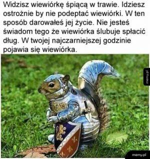 Szlachetna wiewiórka