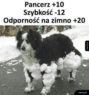 Uzbrojony pies