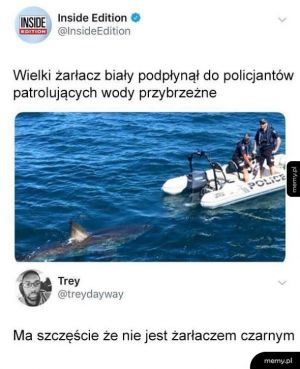 Żarłacz biały