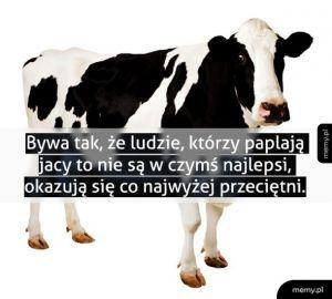 Bo krowa co dużo ryczy, mało mleka daje.