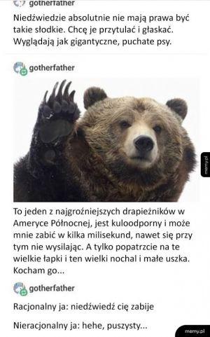 Niedźwiedzie są zabójczo słodkie