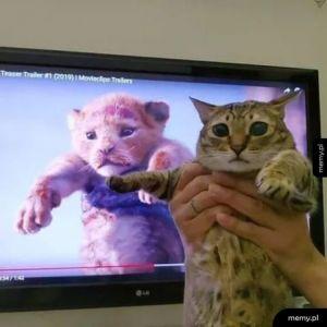 Koteł Lew!