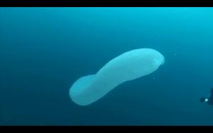 Dziwne morskie stworzenie