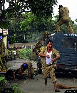 Kolejny zwykły dzień w Indiach...