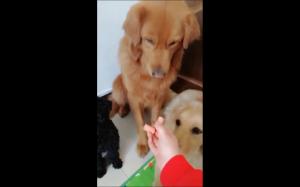 Pies dzieli się przysmakiem z kumplami