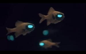Świecące rybki