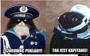 Kapitan koteł