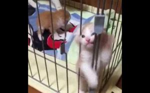 Jestem niewinny! Wypuśćcie mnie!