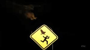 Uwaga na sowy