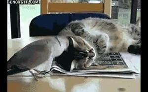 Wstawaj leniwy kocie