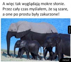 Prawdziwy kolor słoni