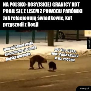 liseł vs koteł, epic battle, ochrona granic