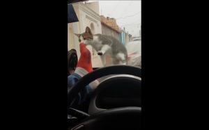 Kara za straszenie kotełka