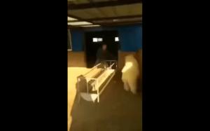 Hardkorowa owca