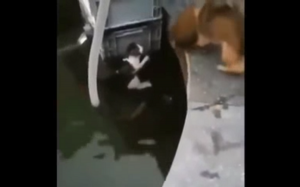 Pies ratuje kota