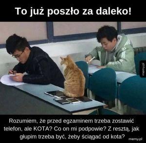 Każdy powinien mieć swobodny dostęp do kota na każdym etapie egzaminu!