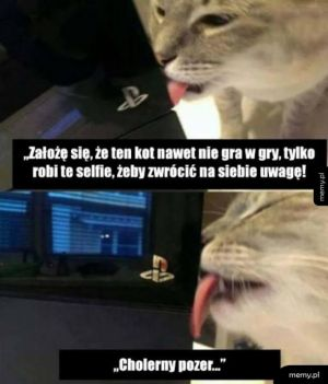 Koty to pozery