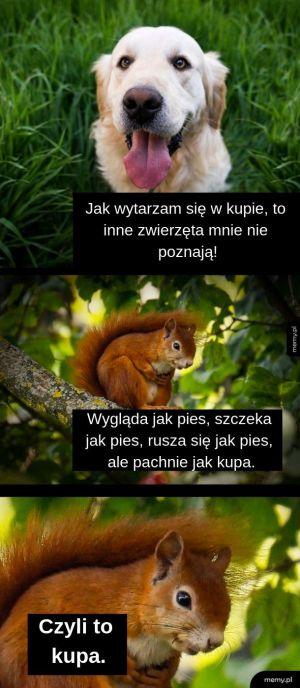 Logika wiewiórek.