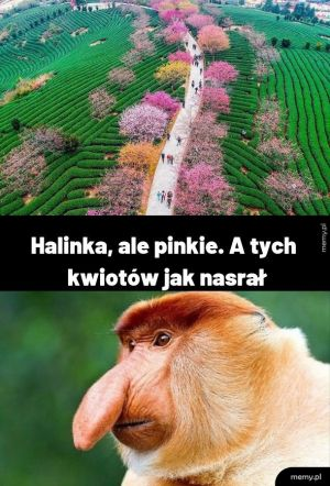 Wiosenny Janusz