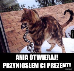Kiedy kot cie kocha