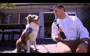Bardzo sympatyczny pies