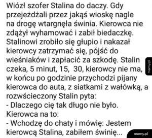 Stalin świnia