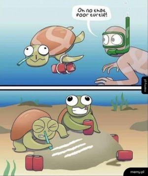 Biedny żółw