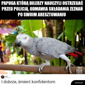 Prawilna papuga