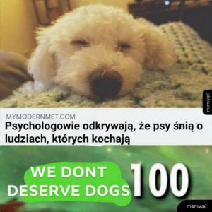 Kochane psiaki