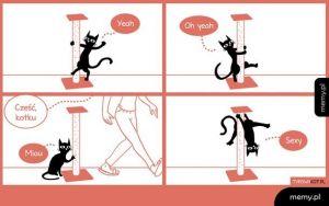 Co robią koty, kiedy nikt nie patrzy