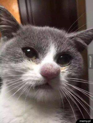 Kot kontra pszczoła