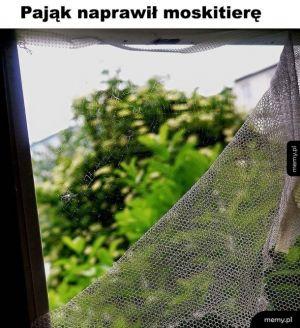 Dobry ziomek pająk