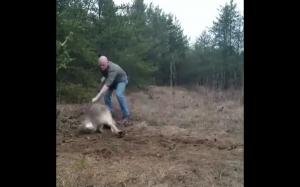 Facet ratuje wilka z potrzasku
