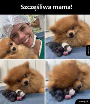 Mamiś