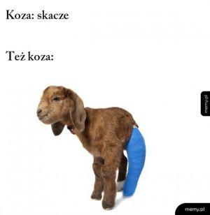 Skoczna ta koza