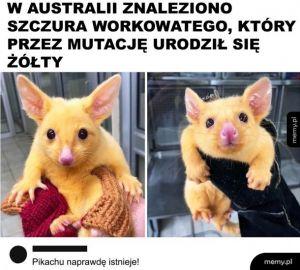 Pikachu?