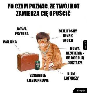 Po czym poznać, że twój kot zamierza cię opuścić