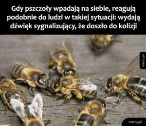 Kolizja pszczół