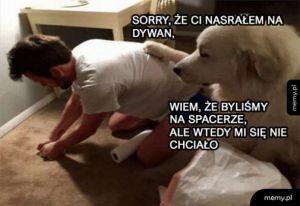 Sorry, że Ci nasrałem na dywan